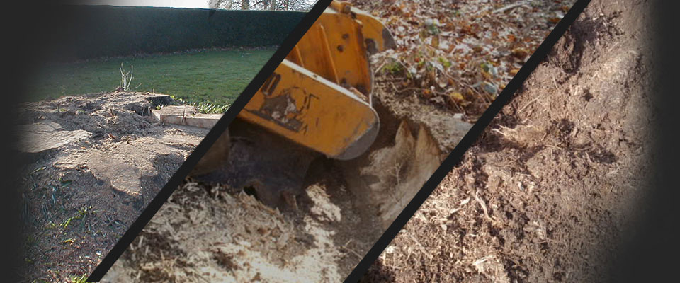 Stump grinding in action. Felled tree stumps are reduced to woodchip and removed in minutes.
